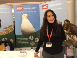 Alice and Scarlet, a harrier Hawk from NBC Environments