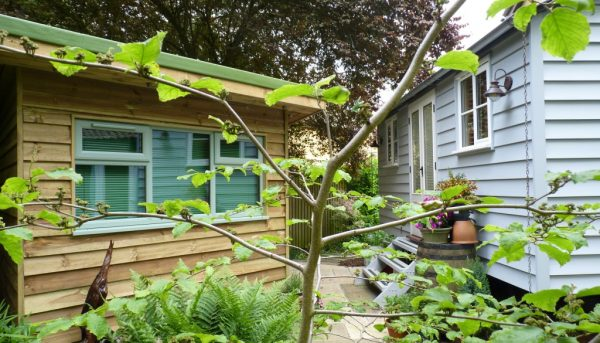 A tree in front of house and shed | Norwich Sunblinds